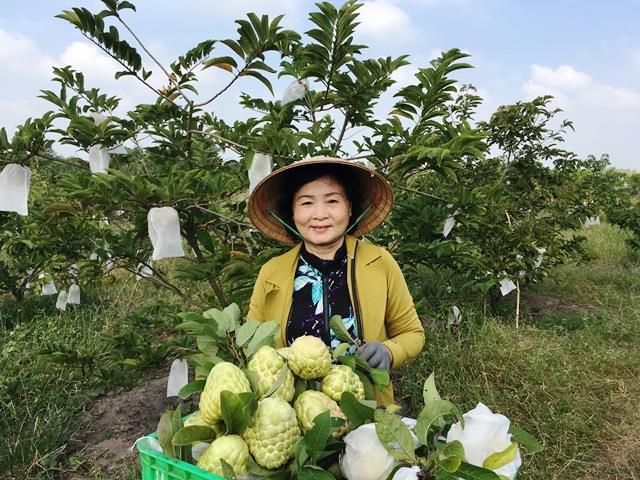 Mãng cầu Bà Đen- Thơm ngon nức tiếng vùng đất thánh Tây Ninh