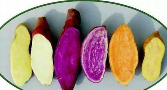 Ăn khoai lang có tác dụng giảm béo