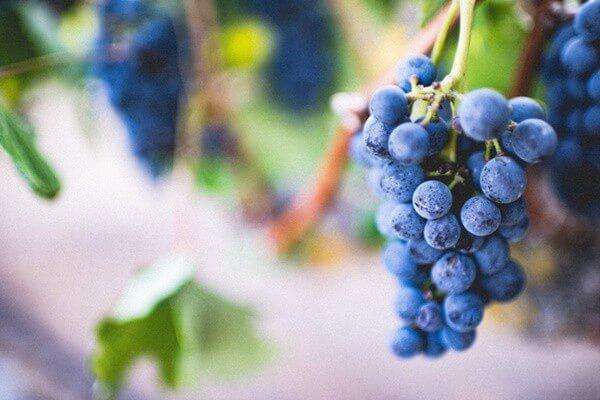 Nho -10 loại trái cây tốt cho từng bộ phận cơ thể