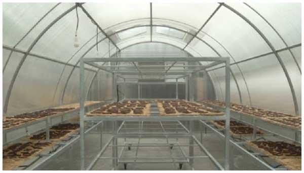 nhà kính phơi sấy nông sản điển hình đang được áp dụng ở Việt nam