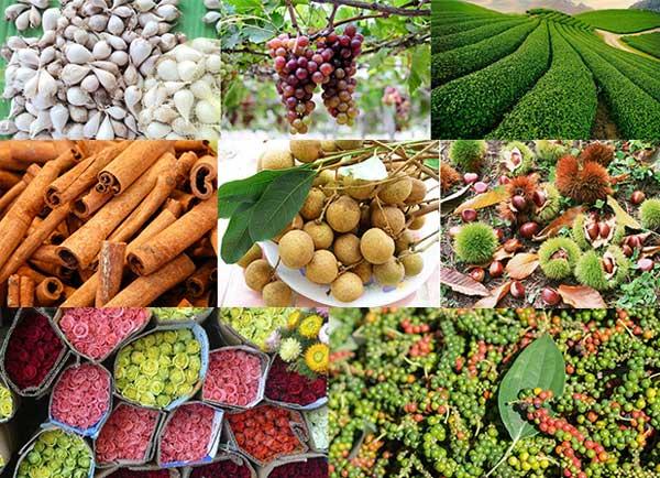 [TOP 15] Các loại nông sản Việt Nam nổi tiếng được thế giới ưa chuộng